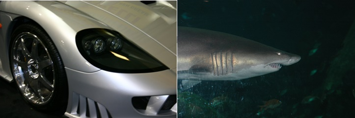 Shark and Car