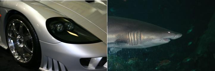 Shark and Car